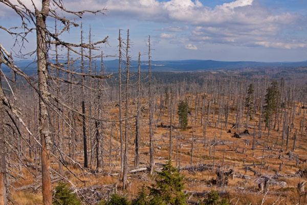 Waldsterben Referat